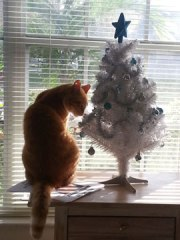 pumpkin, cat, tree, christmas tree, decorations, celebrate, holiday, trim the tree, lynne st. james, holiday
