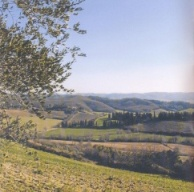 vineyards, olive oil, tuscany, italy, bucket list, lynne st. james
