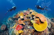 great barrier reef, australia, natural wonder, marine life, fish, snorkle, bucket list